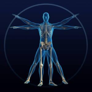 Orthopedics, Muscle & Bone