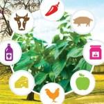 Fondacija Divac pomaže mlade poljoprivrednike