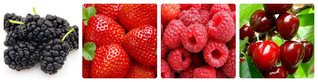 сбор ягод в центре Израиля