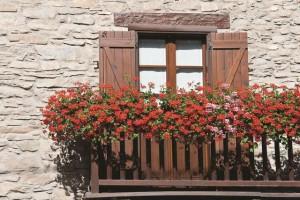 augalai balkone