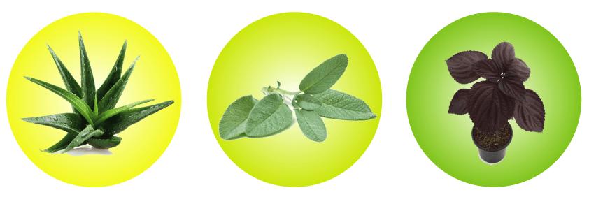 plantas-medicinales-imagen-2