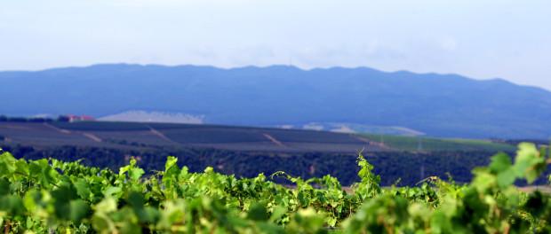 Vedere din Panciu spre Tifești