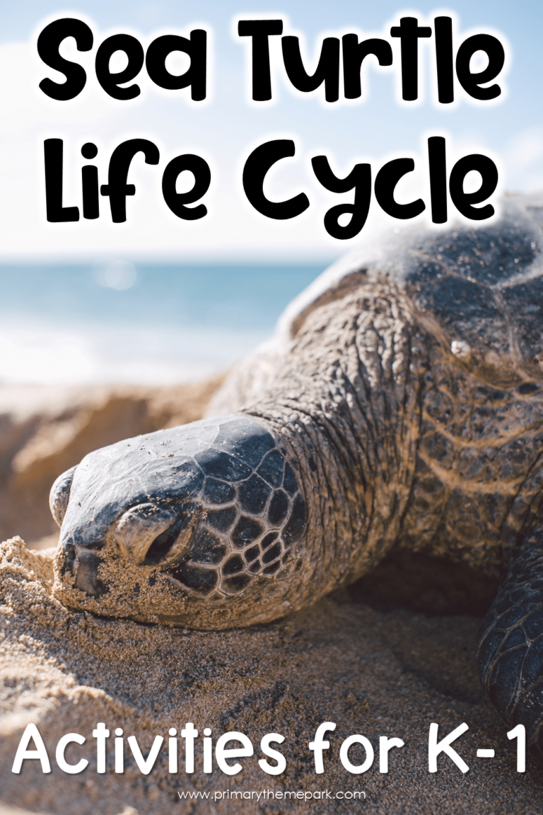 Sea Turtle Life Cycle Activities Primary Theme Park