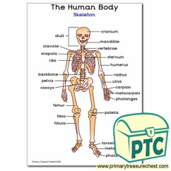 Castle Diagram With Labels Fat Structure 'human Skeleton' A4 Poster (with Labels) - Primary Treasure Chest
