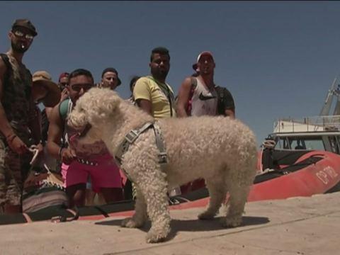 Sbarco assurdo a Lampedusa, immigrati tunisini in tenuta turistica e barboncino a seguito, ecco cosa ha dichiarato la proprietaria del cagnolino