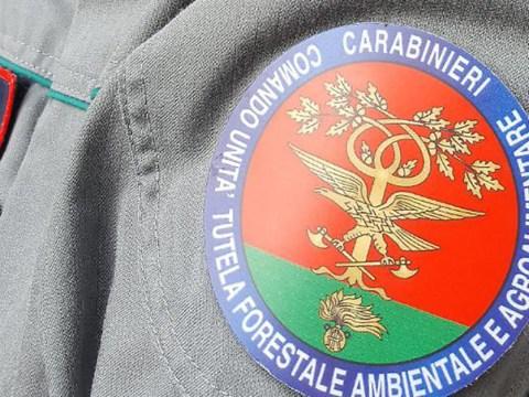 Undici posti a concorso per tenente dell'Arma dei Carabinieri nel Corpo Forestale