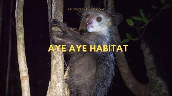 aye-aye-habitat
