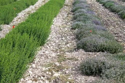 sicilia-aromi-3