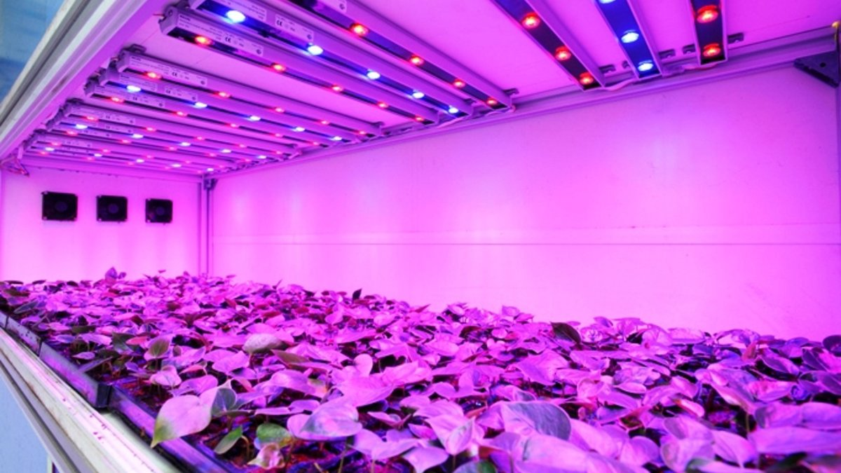 LED Lights With UV Produce Plants With More Trichome Formations