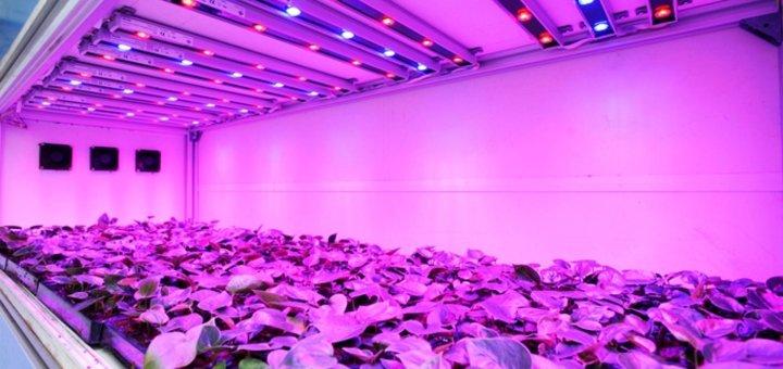 Indoor Gardening With LED - UV Lights