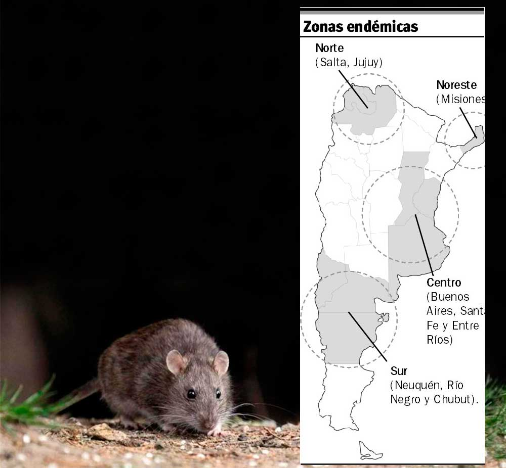 Hantavirus: Misiones is an endemic area, but only one case in ...