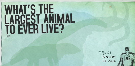 Know It All Whats the Largest Animal to Ever Live