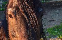 Horse Hair Braiding and Its Fascinating History