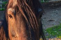 Horse Hair Braiding and Its Fascinating History - Prime ...