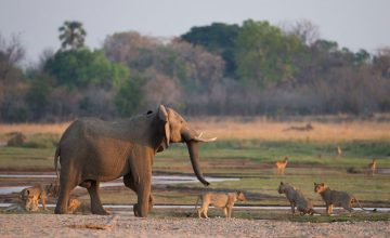 3 Days Zambia Safari to South Luangwa