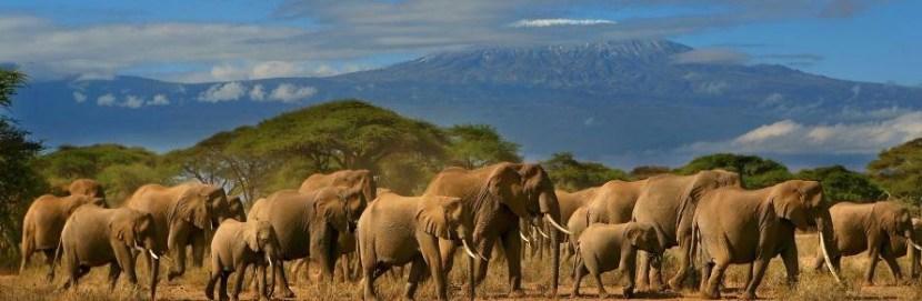 Amboseli-National-Park-kenya safari tours