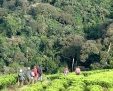 BWIND -NATURE WALKS