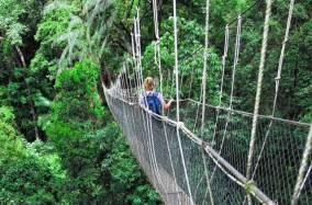 Canopy-Walk Nyungwe