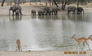 5 Days Wildlife safari in Tanzania, African Wildlife Tanzania Safari Tour