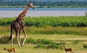 Murchison Falls Park Wildlife Safari in Uganda 3 Days