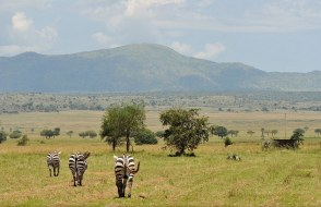 Nature Walk Kidepo Valley National Park Uganda tour