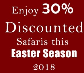 Discounted Safaris This Easter Season