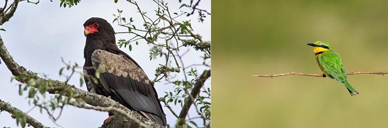 birding-bwindi-forest-national-park