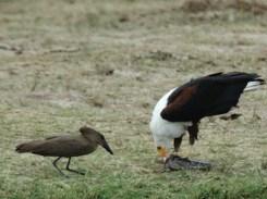 birding in queen