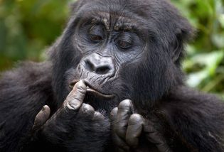 Bwindi Impenetrable National Park, Uganda Gorilla tracking safari