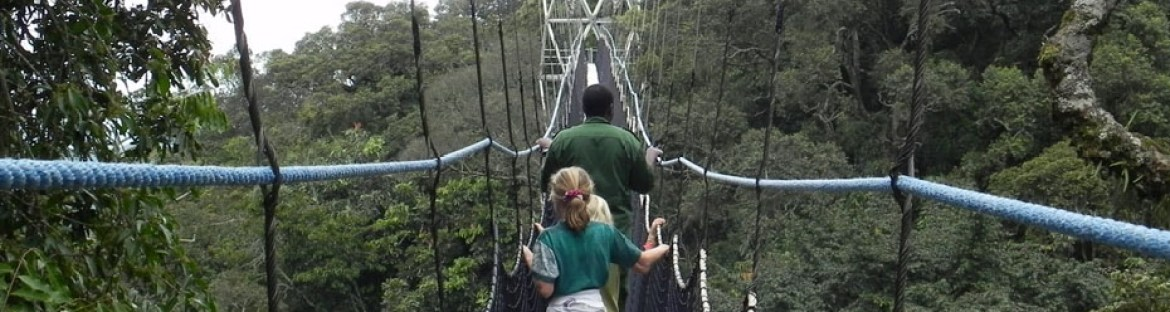 canopy-walk-in-nyungwe-np