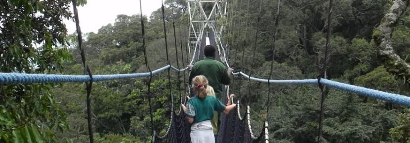 canopy-walk-in-nyungwe-np