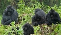 gorilla safaris and tours in bwindi