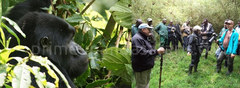 gorilla-tracking-rwanda