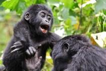 gorilla-trekking in uganda