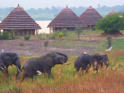 heritage safari lodge-accommodation in Murchison falls np