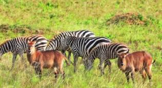 wildlife at kidepo np-uganda