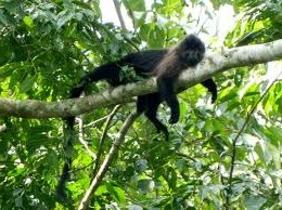 mabira forest reserve