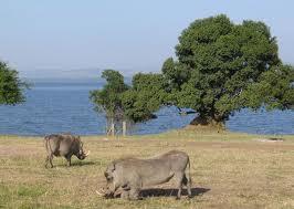 lake mburo uganda wildlife