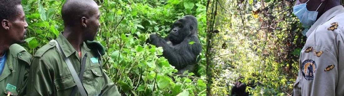mountain-gorilla-trekking-virunga
