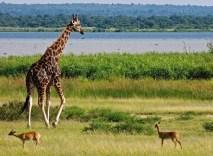 murchison-falls-uganda park