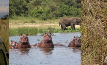 Murchison Falls & Kibale Short Uganda safari- 5 days uganda tour