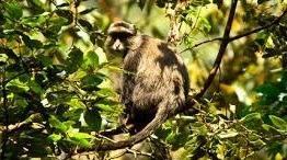 primates nyungwe safari lodge