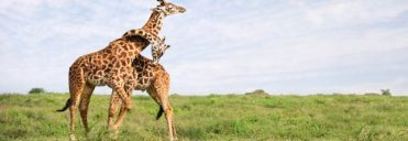 serengati-national -park- east africa safaris