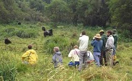 gorlla trekking rwanda