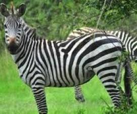 uganda safari tourist attractions