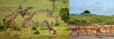 wildlife-at-arusha-national-park