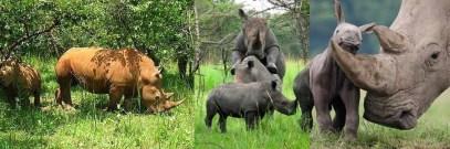 ziwa-rhinos uganda safari