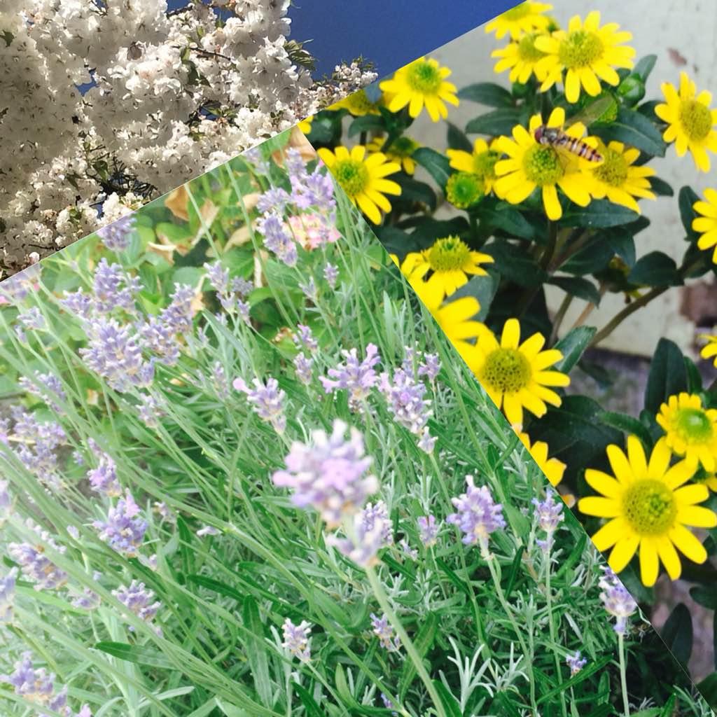 Flowers honeybees love the BEST!