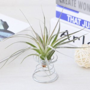 air plant wire metal stand display