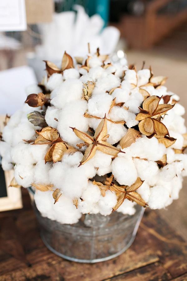 Entretenir repasser et prendre soin du coton  code dentretien du coton